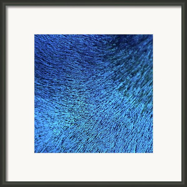 Close Up Of Peacock Feather Framed Print By Madmàt
