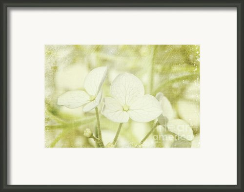 Closeup Of Hydrangea Flowers With Vintage Background Framed Print By Sandra Cunningham