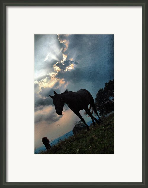 Clouds And Equine Framed Print By Emily Stauring
