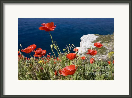 Coastal Poppies Framed Print By Richard Garvey-williams