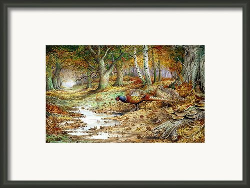Cock Pheasant And Sulphur Tuft Fungi Framed Print By Carl Donner