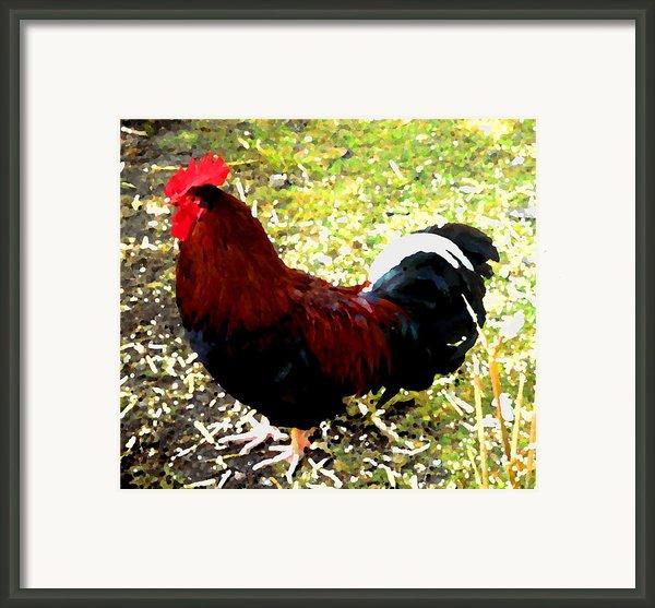 Cock Framed Print By Roberto Alamino
