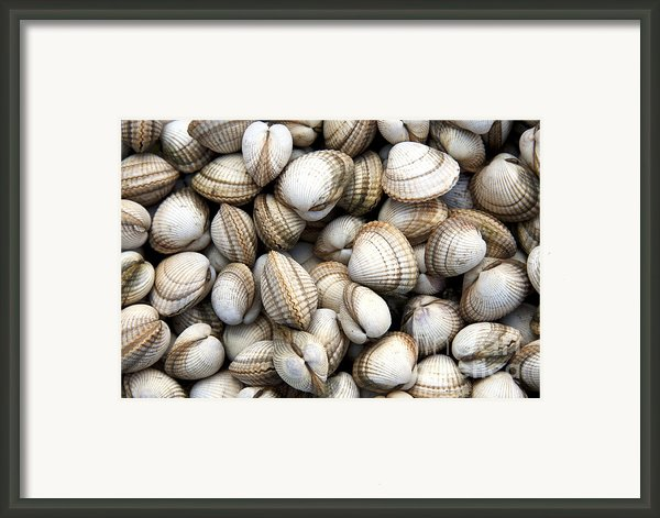 Cockle Shell Background Framed Print By Jane Rix