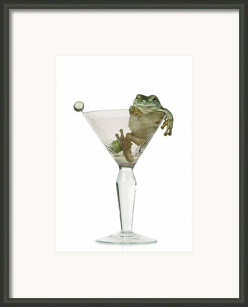 Cocktail Frog Framed Print By Darwin Wiggett