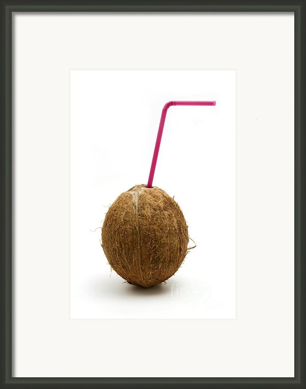 Coconut With A Straw Framed Print By Fabrizio Troiani