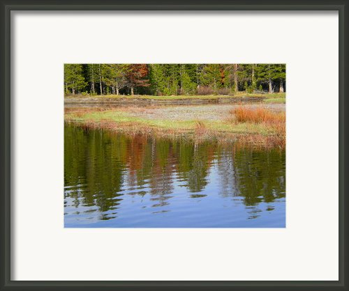 Color Reflections Framed Print By Trent Mallett