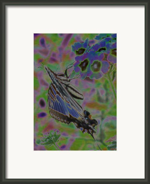 Colorflow Butterfly Framed Print By Debra     Vatalaro
