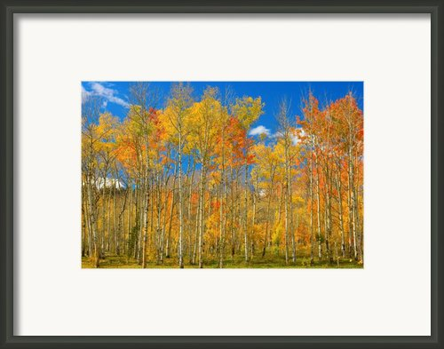 Colorful Colorado Autumn Landscape Framed Print By James Bo Insogna