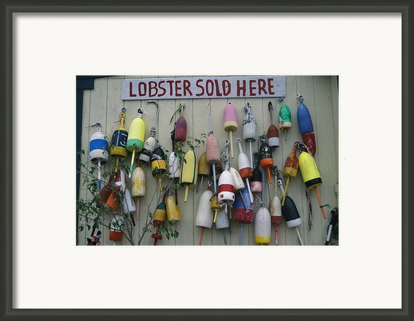 Colorful Lobster Buoys Hang On A New Framed Print By Stephen St. John