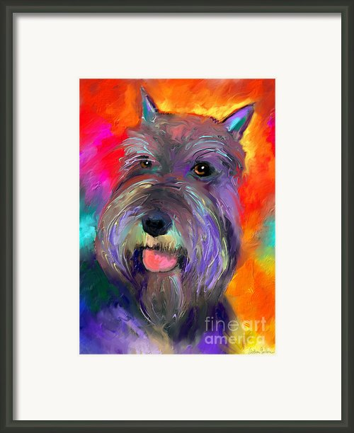 Colorful Schnauzer Dog Portrait Print Framed Print By Svetlana Novikova