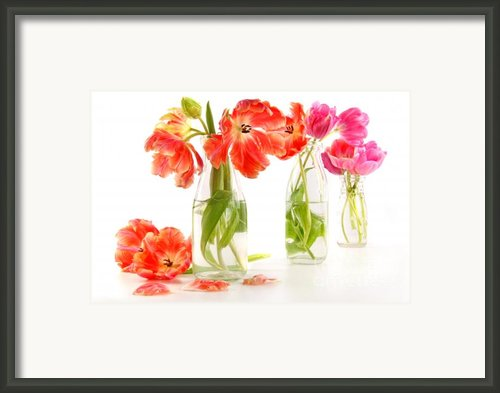 Colorful Spring Tulips In Old Milk Bottles Framed Print By Sandra Cunningham
