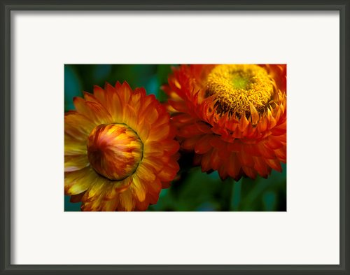 Colors Of Fall Framed Print By Kathy Yates