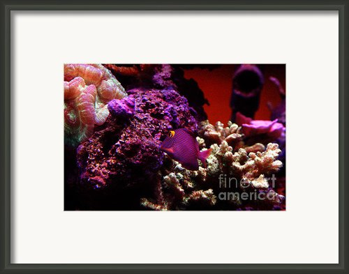 Colors Of Underwater Life Framed Print By Clayton Bruster