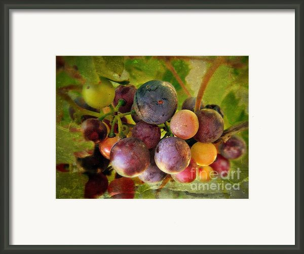 Colors Of Wine Framed Print By Kevin Moore