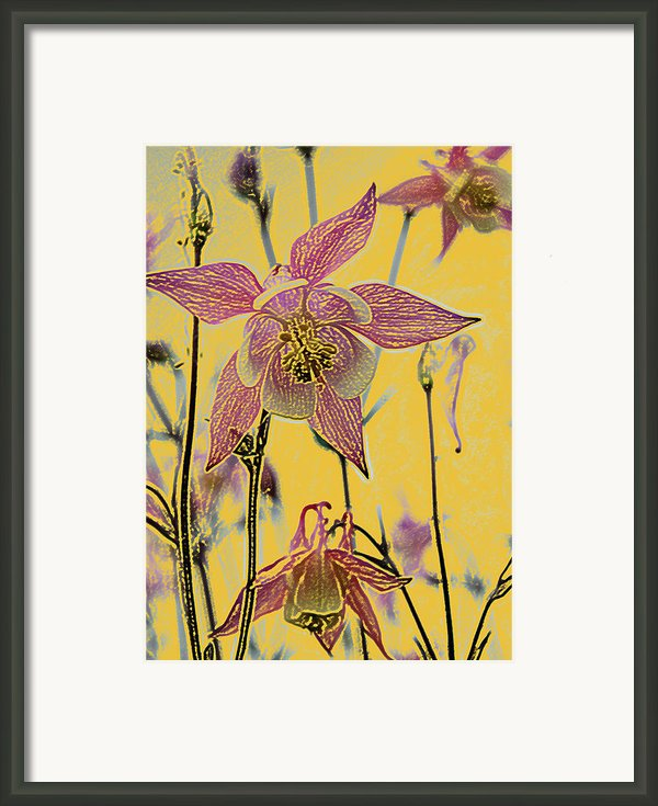 Columbine  Framed Print By Michael Peychich