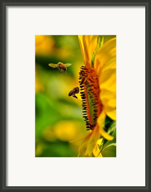 Coming And Going Framed Print By Emily Stauring