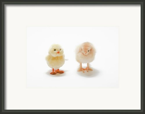 Comparison Framed Print By Jodie Coston