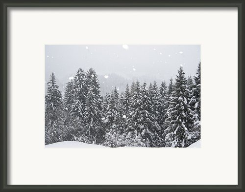 Coniferous Forest In Winter, Alps Framed Print By Konrad Wothe