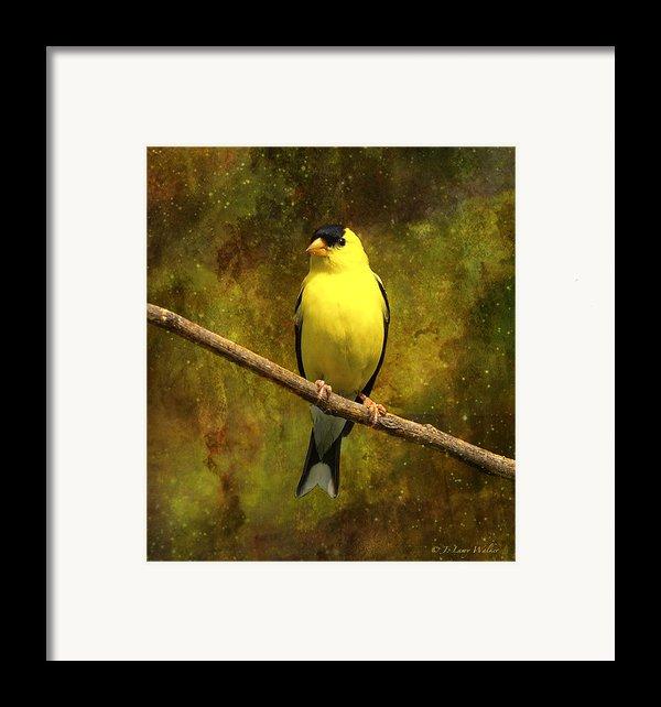 Contemplating Goldfinch Framed Print By J Larry Walker