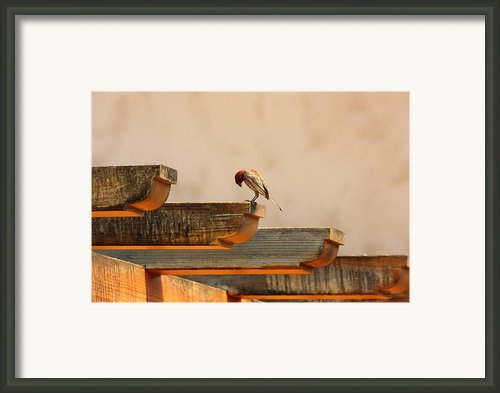 Contemplation Framed Print By Rebecca Cozart