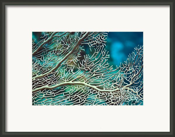 Coral Texture Framed Print By Mothaibaphoto Prints