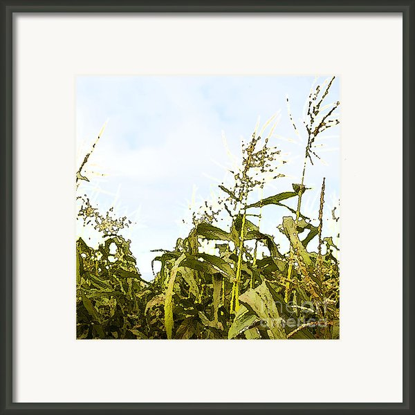 Corn In Summer Framed Print By Author And Photographer Laura Wrede