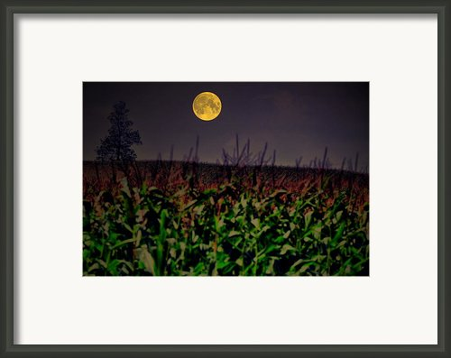 Cornfield Moon Tree Framed Print By Emily Stauring