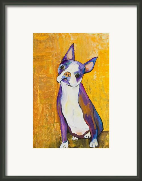 Cosmo Framed Print By Pat Saunders-white