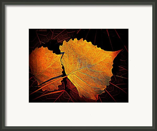 Cottonwood   Framed Print By Chris Berry