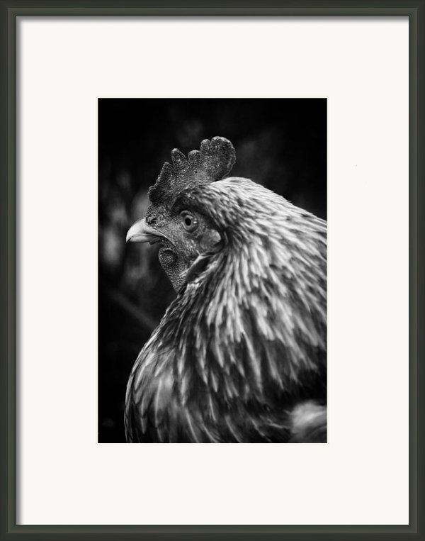 Country Chicken 11 Framed Print By Scott Hovind