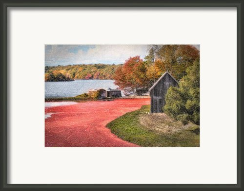 Country Cranberry Farm Framed Print By Gina Cormier