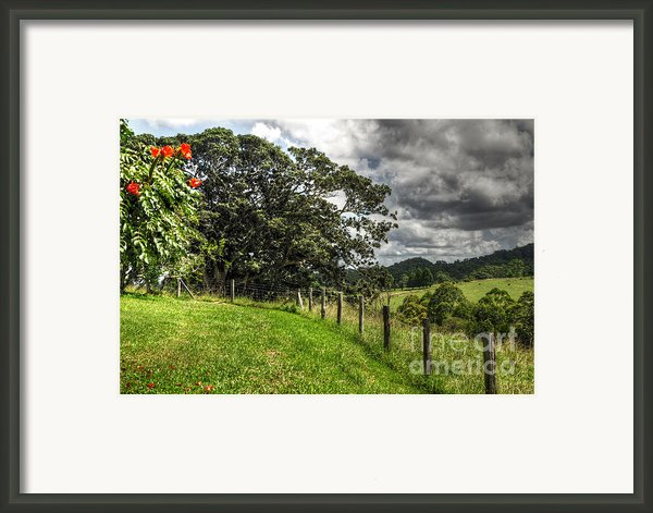 Countryside With Old Fig Tree Framed Print By Kaye Menner