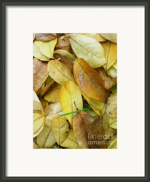 Covering The Green Framed Print By Trish Hale