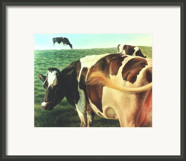 Cows 2 Framed Print By Hans Droog