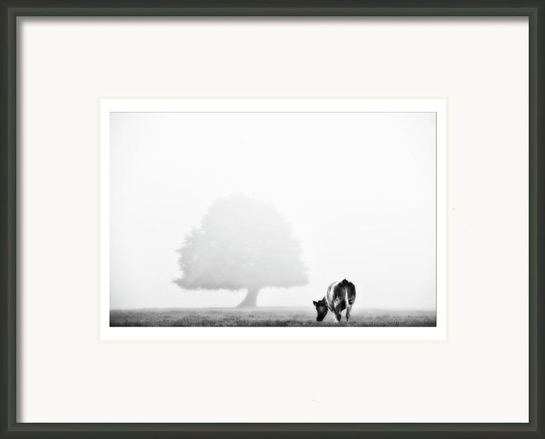 Cows Landscape Photograph Iv Framed Print By Marco Hietberg