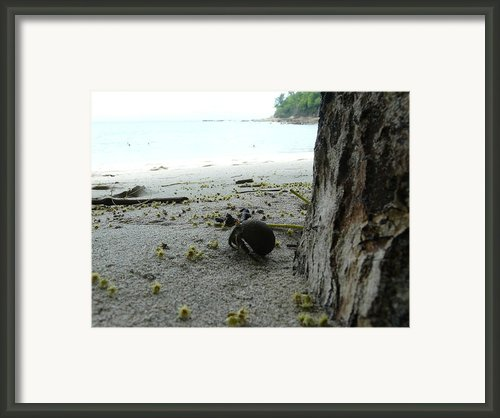 Crab Framed Print By Juan Francisco Zeledon