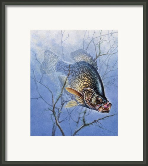 Crappie Cover Tangle Framed Print By Jq Licensing