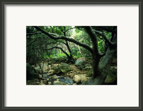 Creek In Woods Framed Print By Kathy Yates