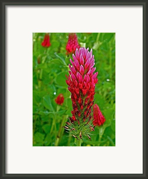 Crimson Clover On Natchez Trace Parkway-ms Framed Print By Ruth Hager