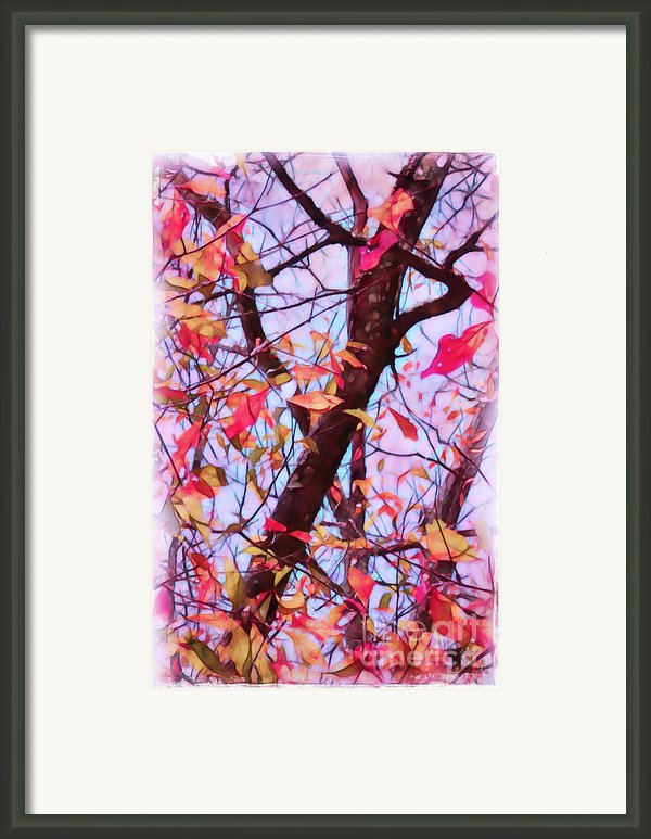 Crisp Autumn Day Framed Print By Judi Bagwell