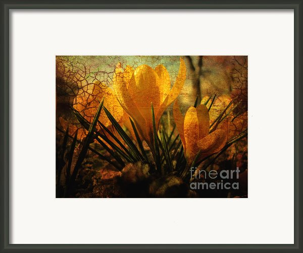 Crocus In Spring Bloom Framed Print By Ann Powell