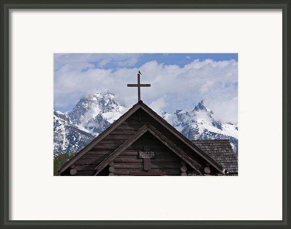 Cross Bird Framed Print By Charles Warren