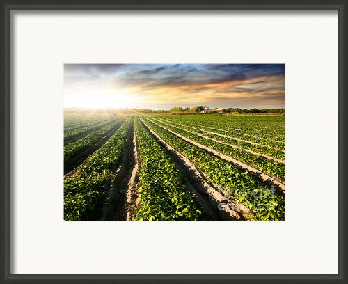Cultivated Land Framed Print By Carlos Caetano