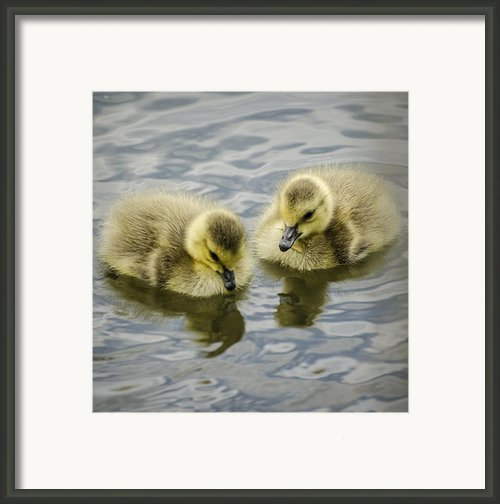 Curiosity Framed Print By Heather Applegate