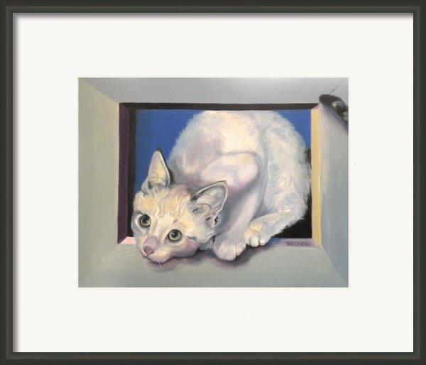 Curiosity Framed Print By Susan A Becker