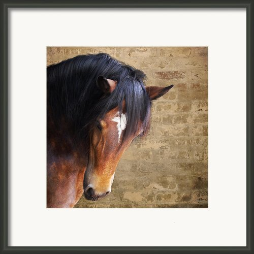 Cute Bay Horse With Long Mane Framed Print By Ethiriel  Photography