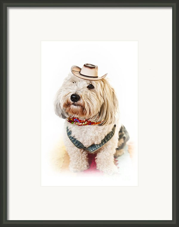Cute Dog In Halloween Cowboy Costume Framed Print By Elena Elisseeva