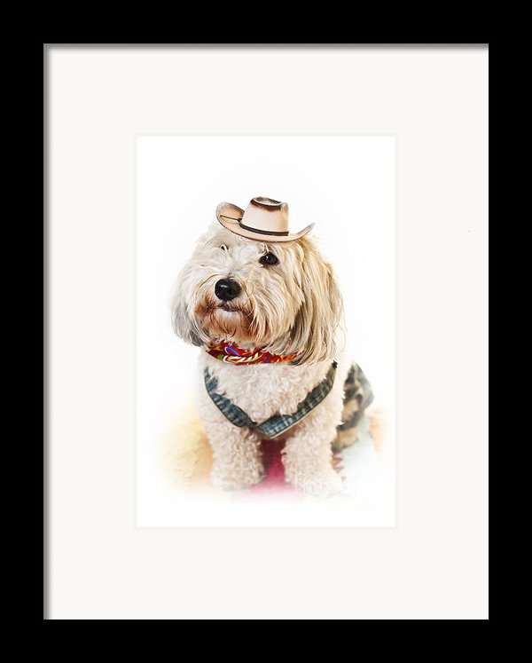 Cute Dog In Halloween Cowboy Costume Framed Print By Elena Elisseeva