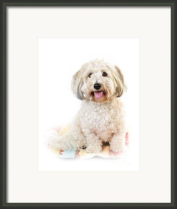 Cute Dog Portrait Framed Print By Elena Elisseeva