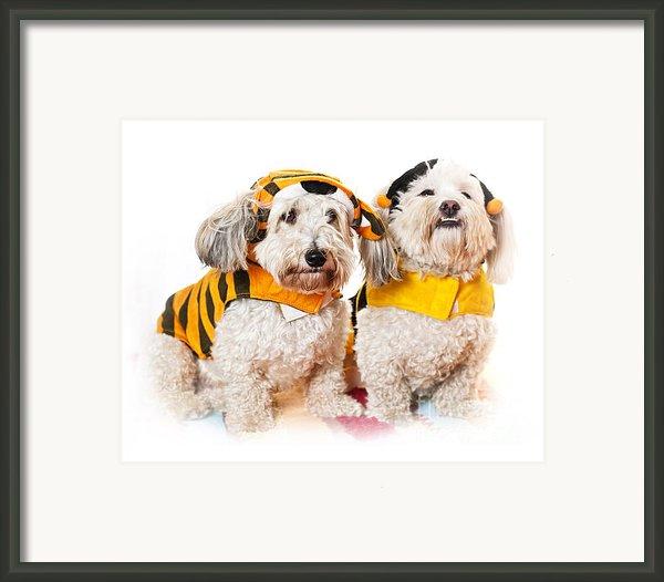 Cute Dogs In Halloween Costumes Framed Print By Elena Elisseeva
